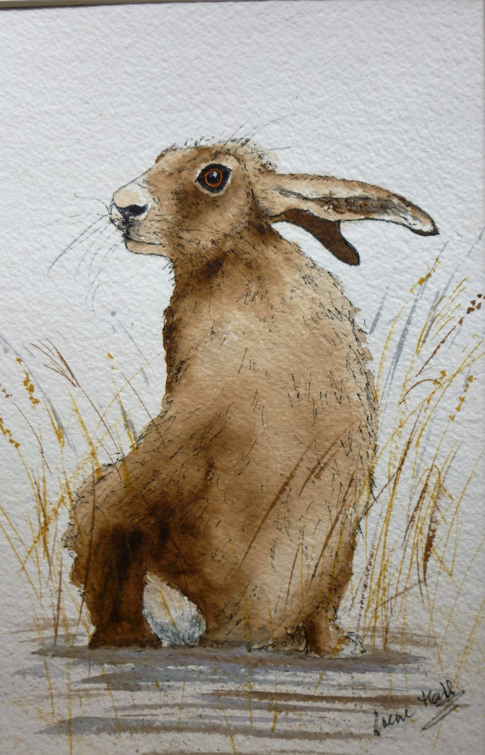 Hare's Looking at You!