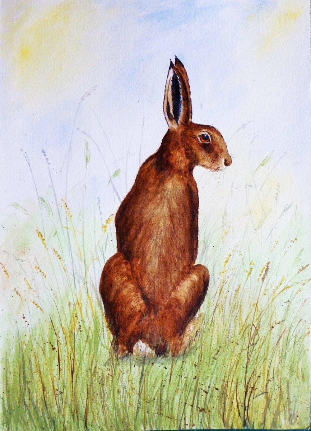 Suffolk Hare