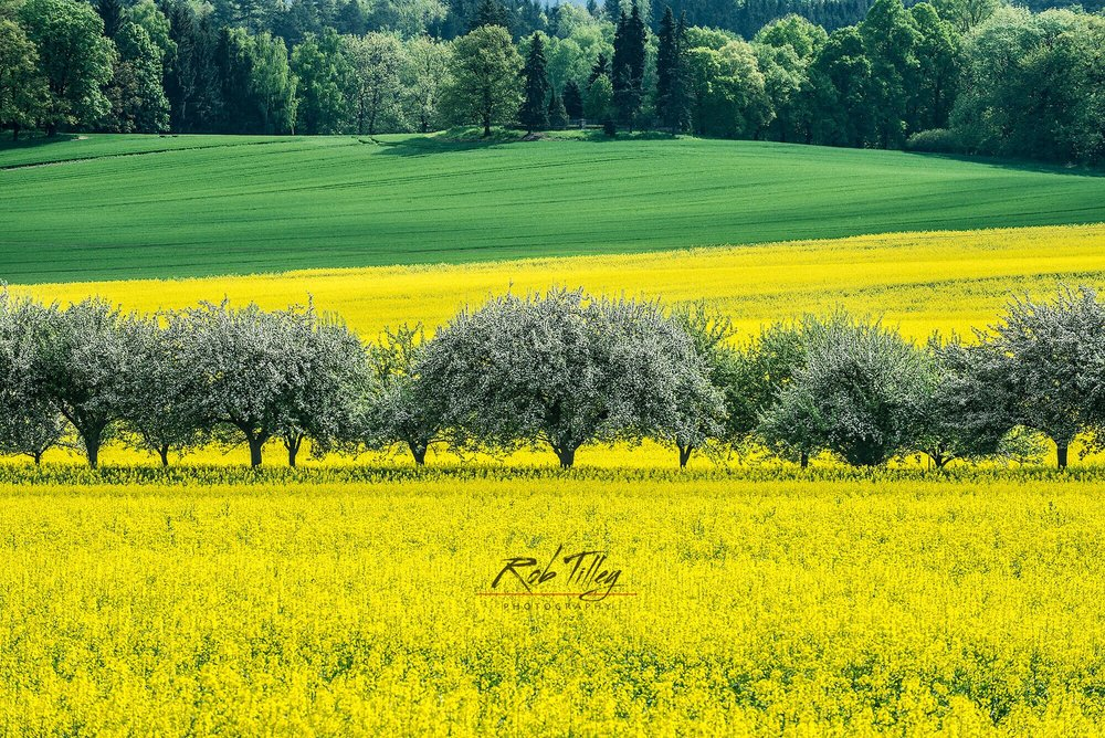 Bohemia Spring I