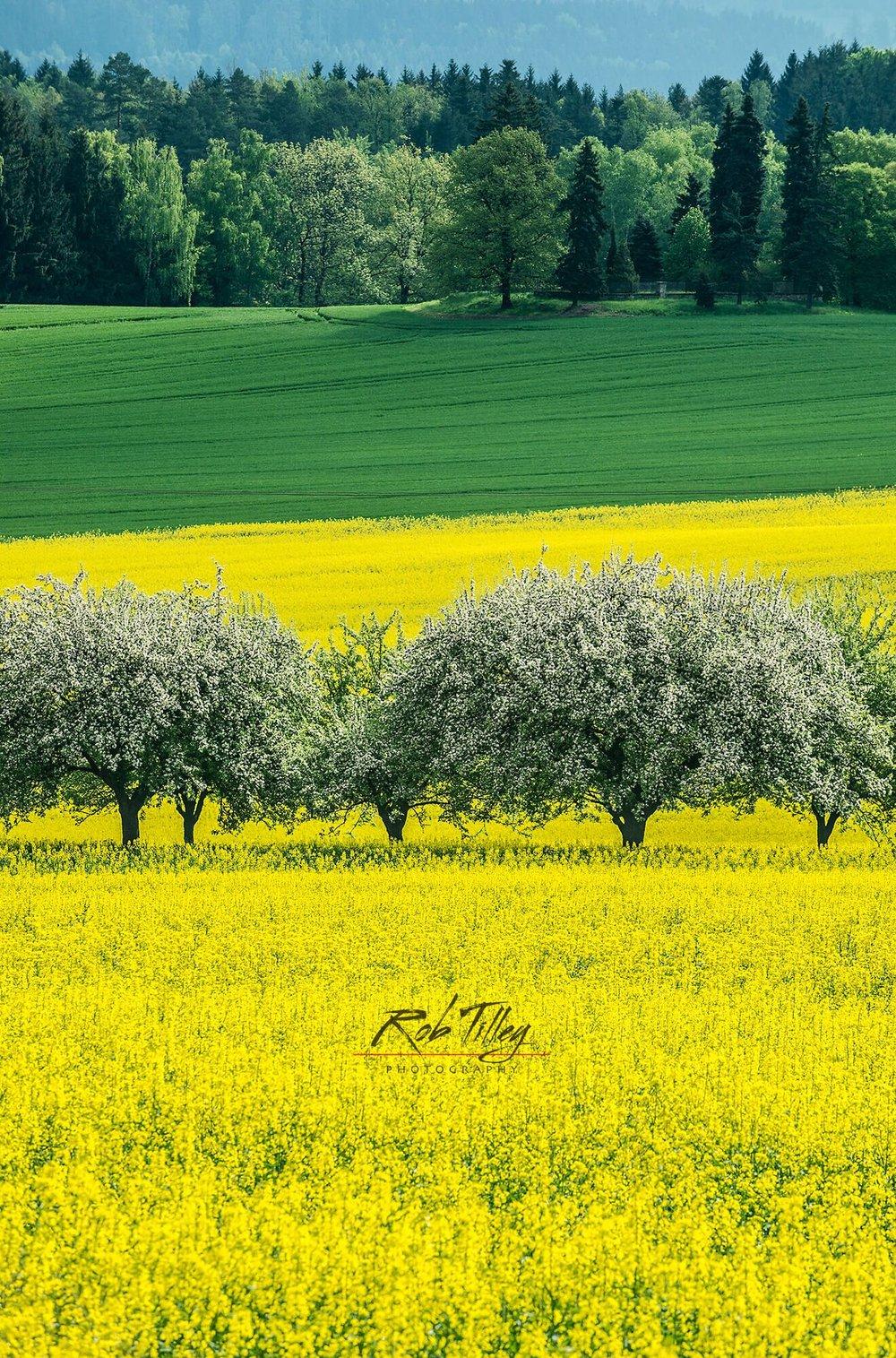 Bohemia Spring II