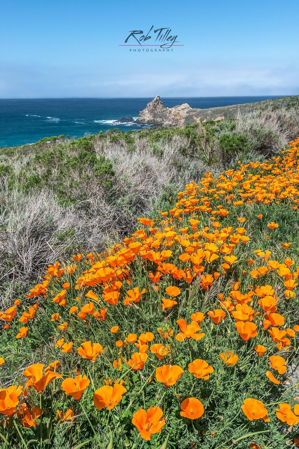 California Poppy Coast