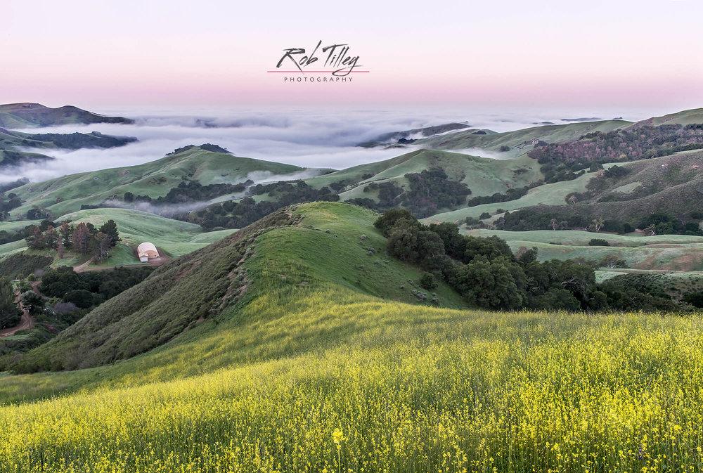 Mustard Hill Dawn