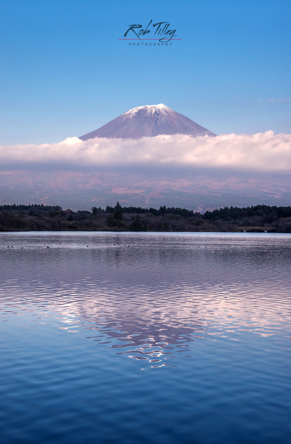 Mt. Fuji & Lake Tanuki II