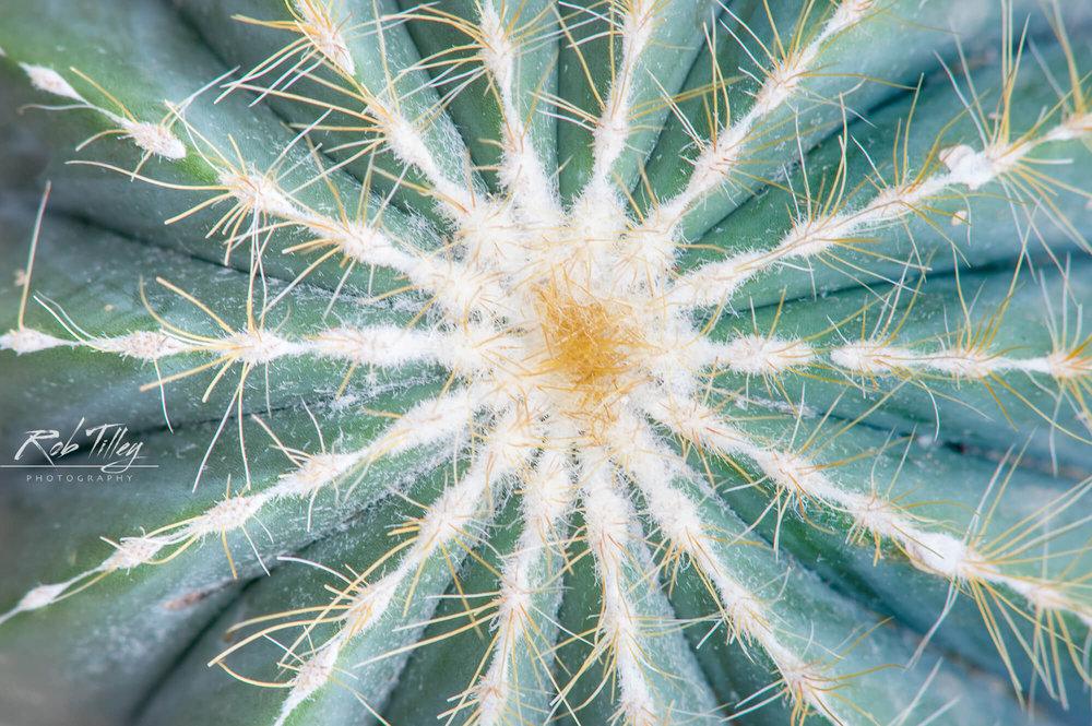 Cactus Detail.jpg