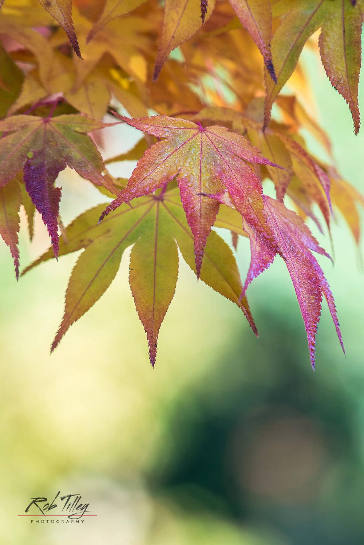 Autumn Leaves III.jpg