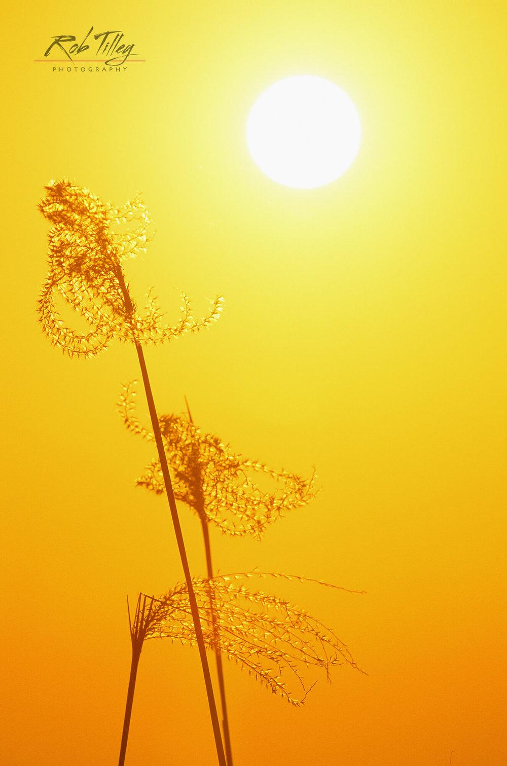 Susuki Sunset
