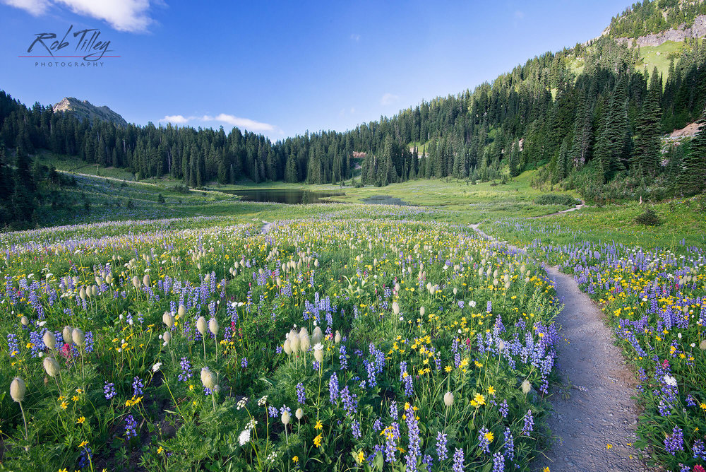 Tipsoo Lake Wildflowers