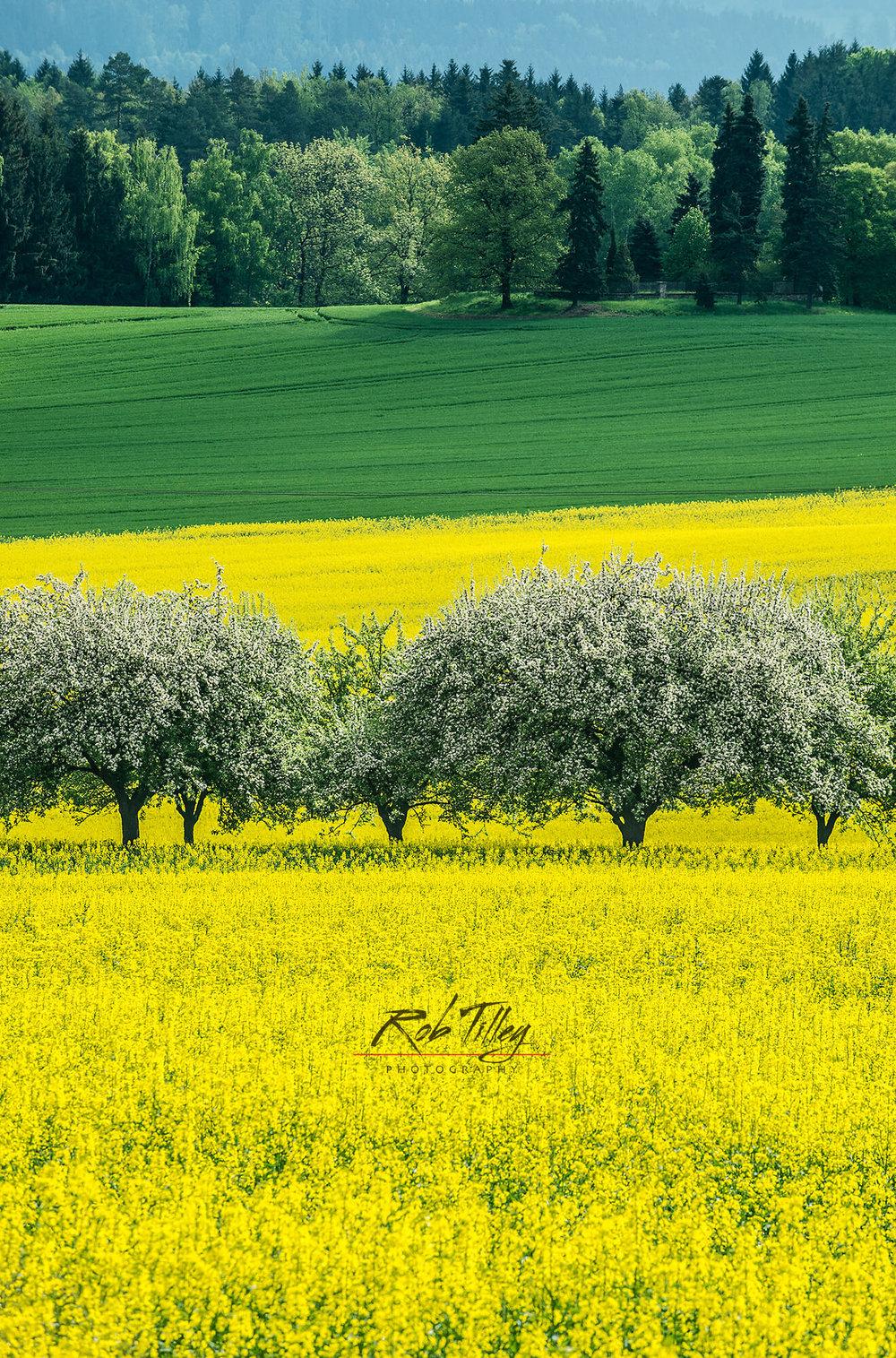 Bohemia Spring II.jpg