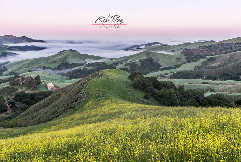 Mustard Hill Dawn.jpg