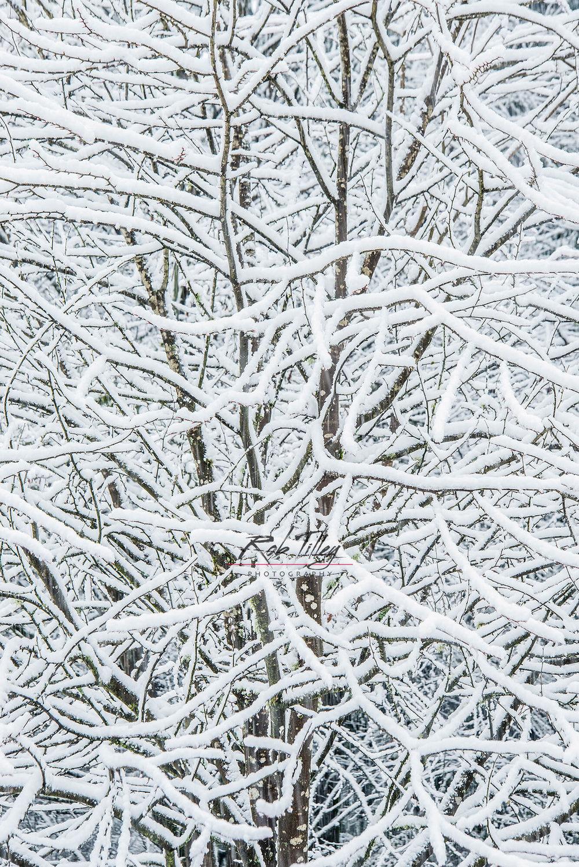 Snowy Tree II