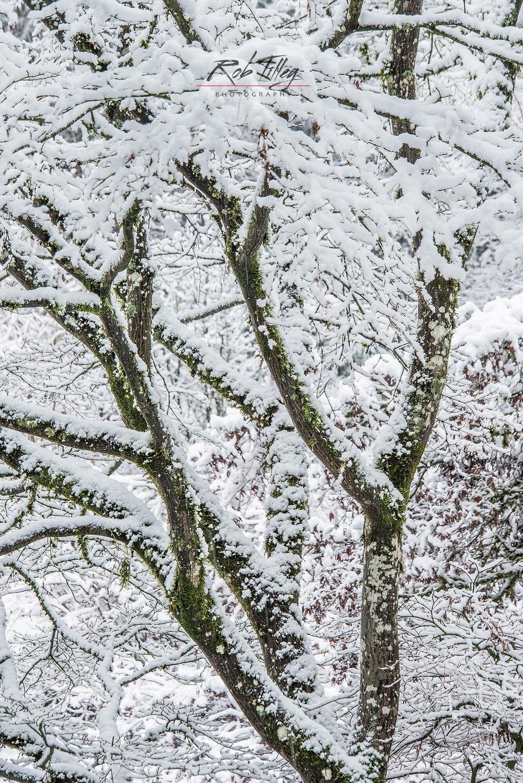 Snowy Tree I.jpg