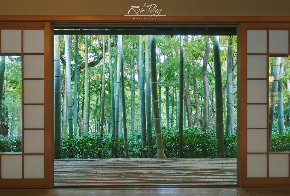 Bamboo Garden Window