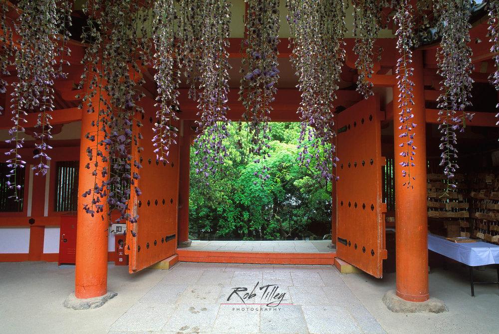 Kasuga Shrine Wisteria.jpg