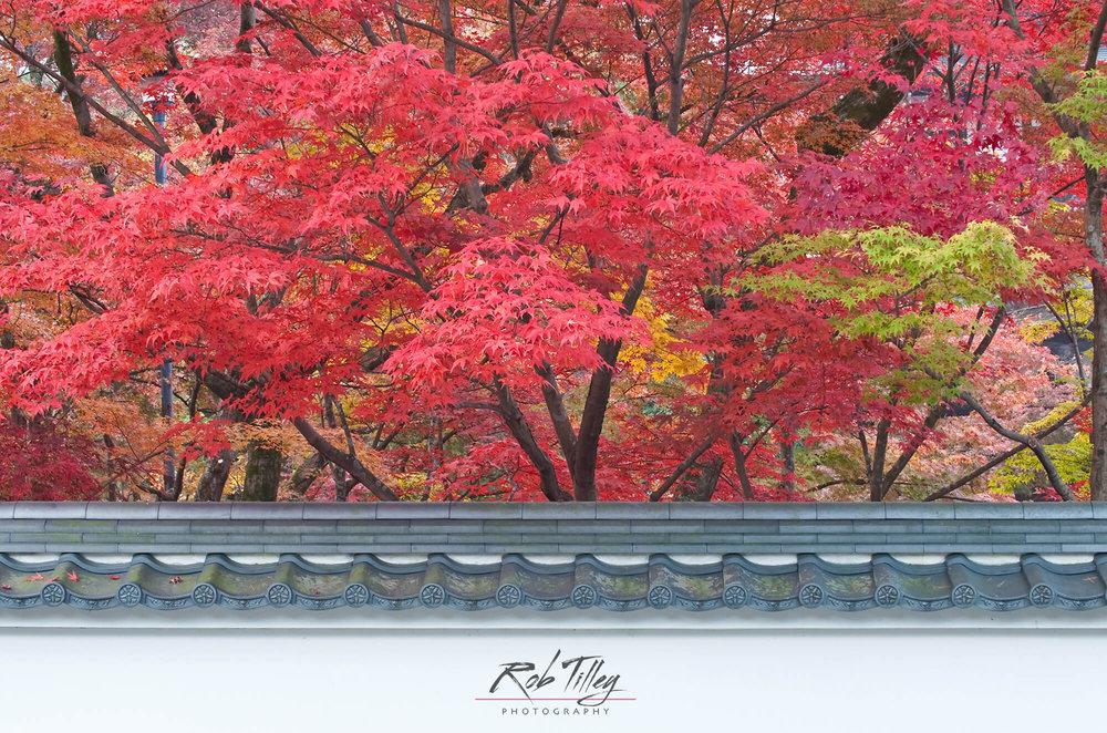 Kyoto Autumn Color I.jpg