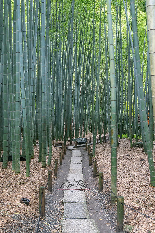 Bamboo Temple Garden II