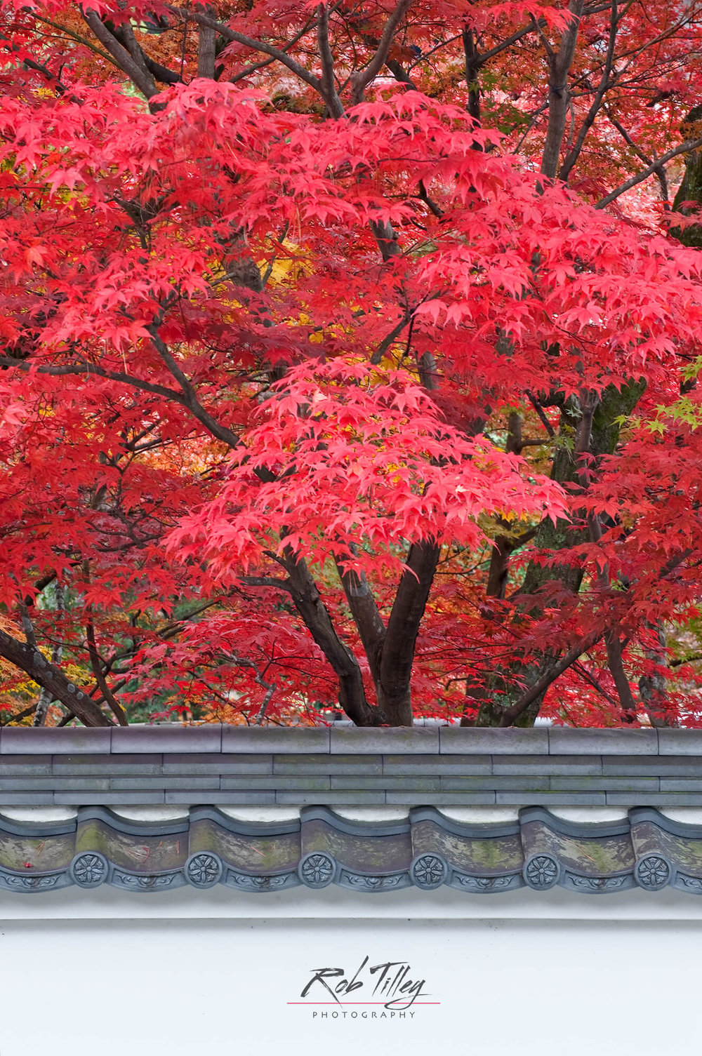 Kyoto Autumn Color II