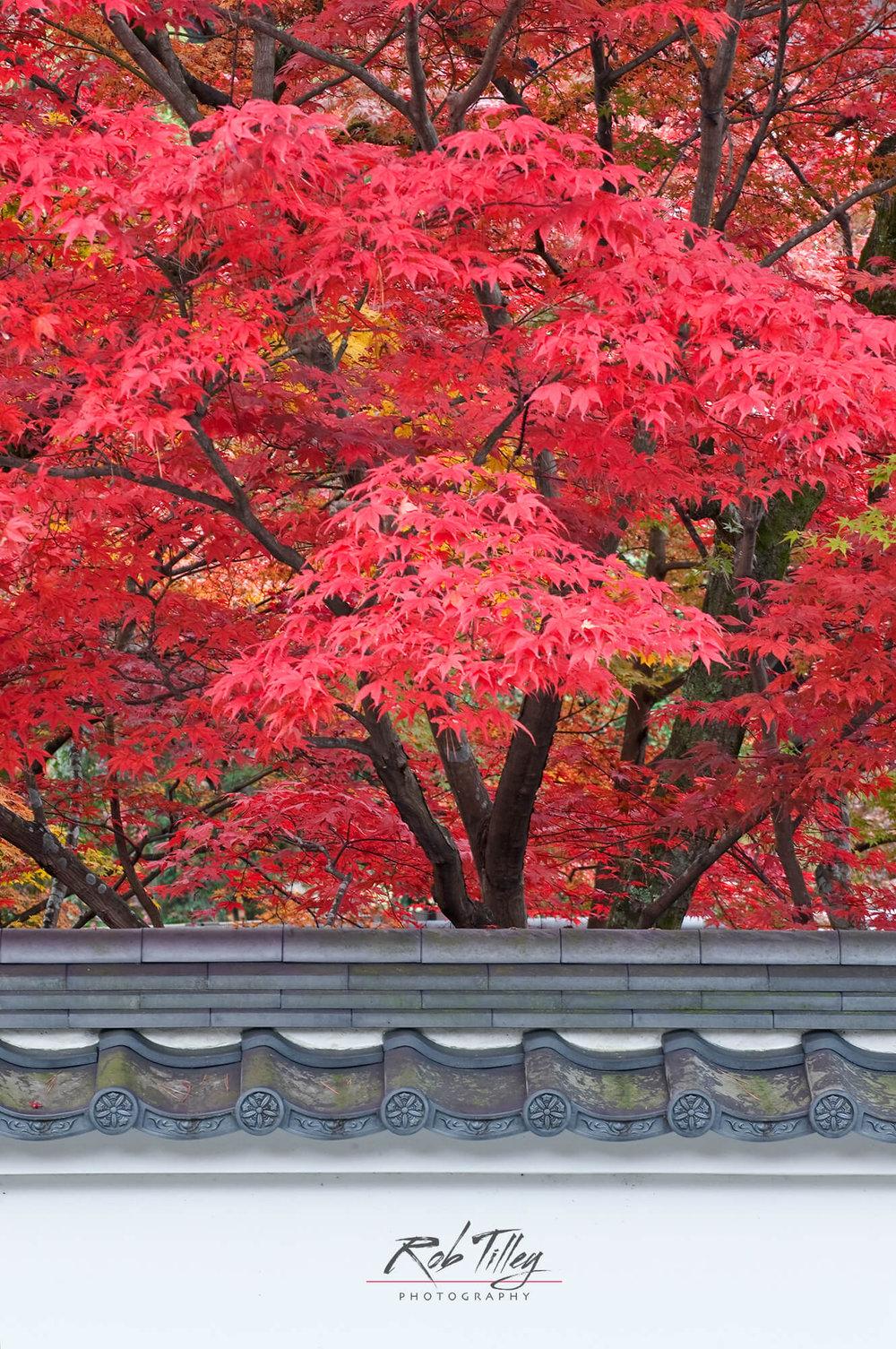 Kyoto Autumn Color II