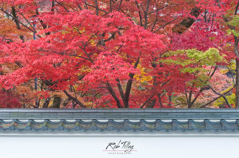 Kyoto Autumn Color I