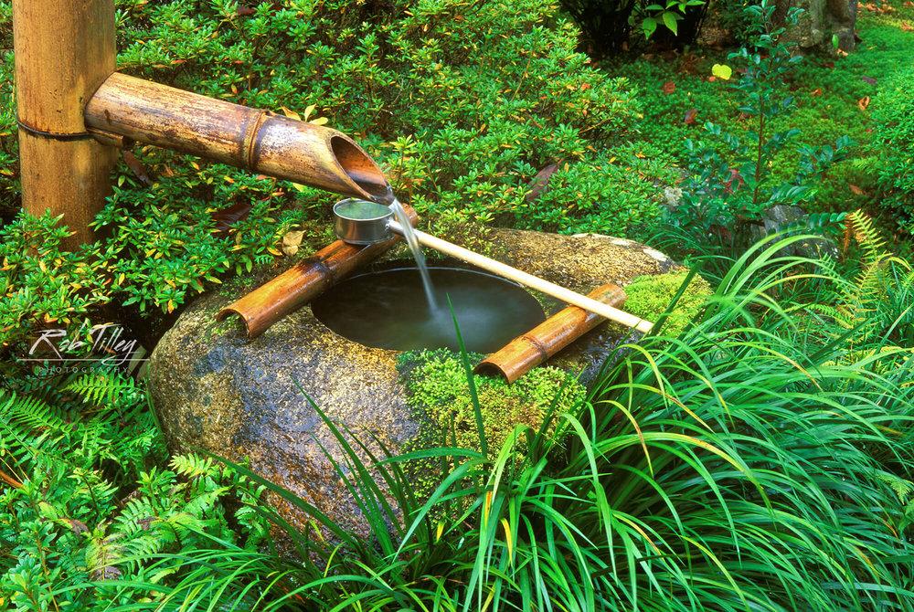 Tea Ceremony Spring