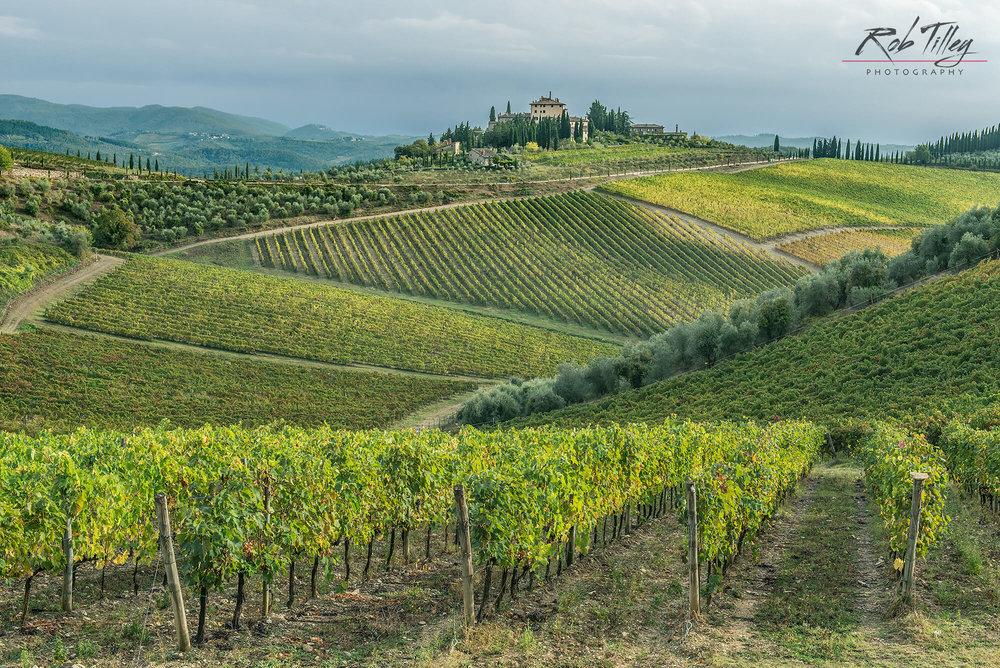 Chianti Vineyard I