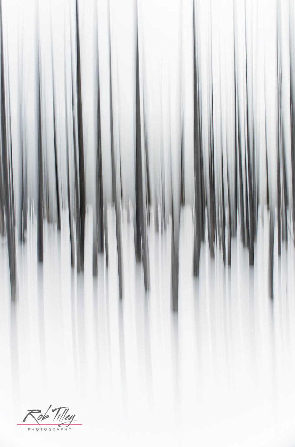 Winter Forest Abstract II