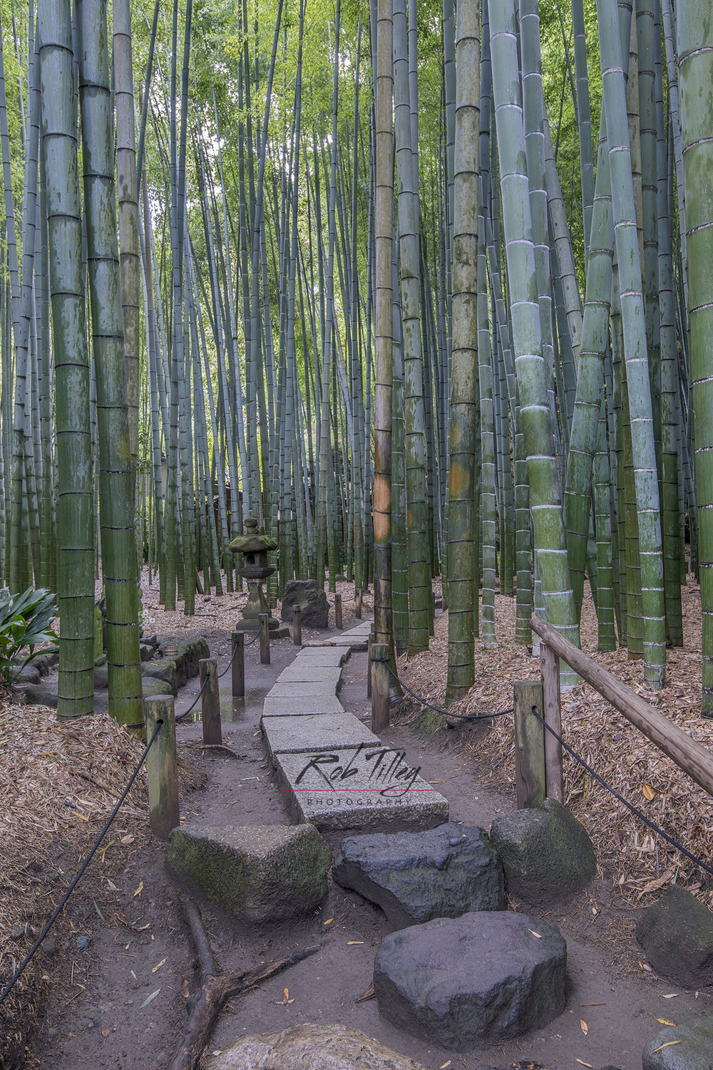 Bamboo Temple Garden III.jpg