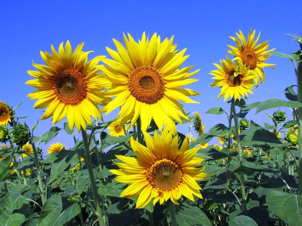 bloom-blossom-flora-59990.jpg