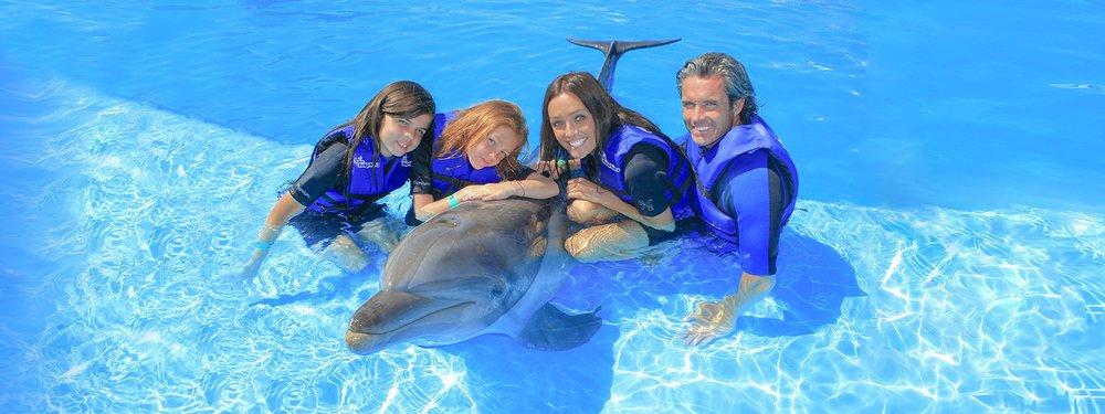 dolphin-swim-ride-experience-cabo-adventures-8.jpg