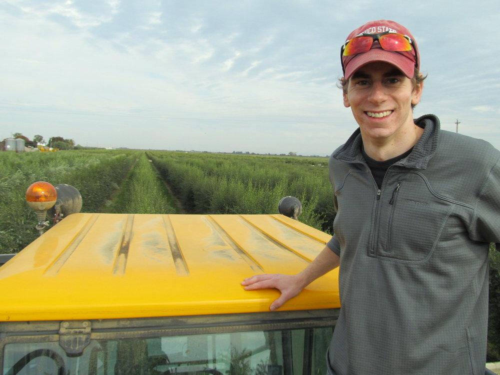 Luke Milliron Olive Harvest.jpg