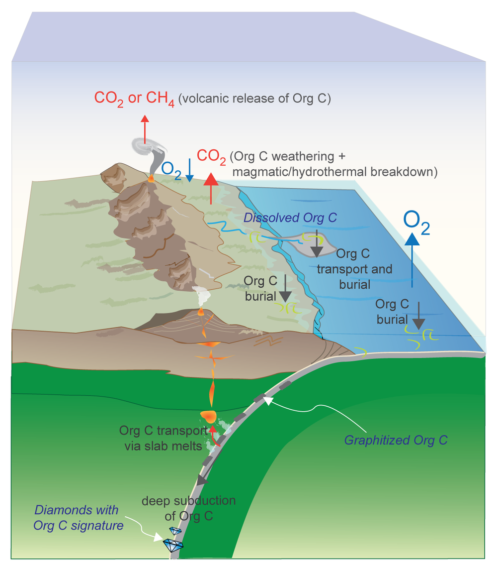 Carbon goes through changes as it is subducted, melted, and erupted onto the surface, affecting the atmosphere and climate. ( Duncan & Dasgupta, 2017 — Nat Geo )