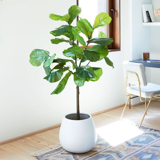 West Elm Fiddle Leaf