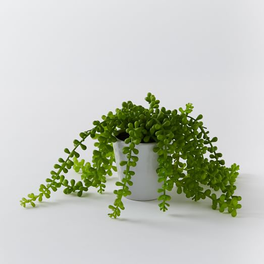 faux trailing succulent