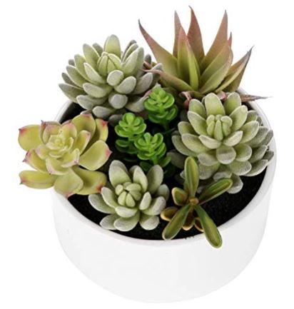 ound succulents