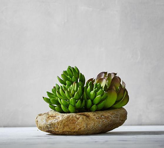 Succulent & stone