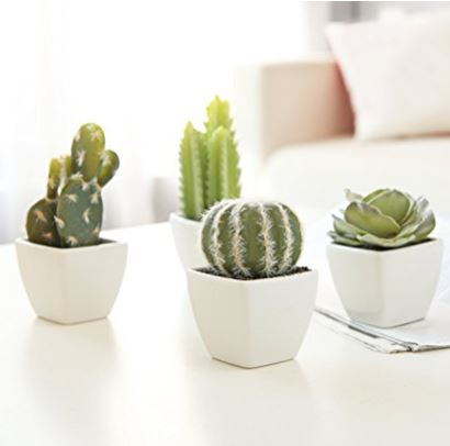 4 Mini Succulents