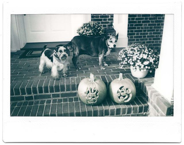 happy halloween from my pumpkin, some rat, and two carved fruits . . #halloween #happyhalloween #instantphotography #instantfilm #instax #nofilter #bwfilmphotography #filmphotography #filmisnotdead #bwfilm #instaxwidemonochrome #instaxwide #monochrome