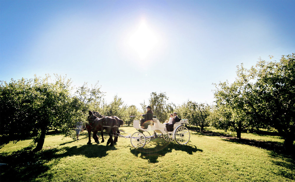 08-Minneapolis-Minnesota-Wedding-Photography-by-Vick-Photography-Minnesota-Harvest-Apple-Orchard-Horse-Carraige-Emilie-&-Giovanni.jpg