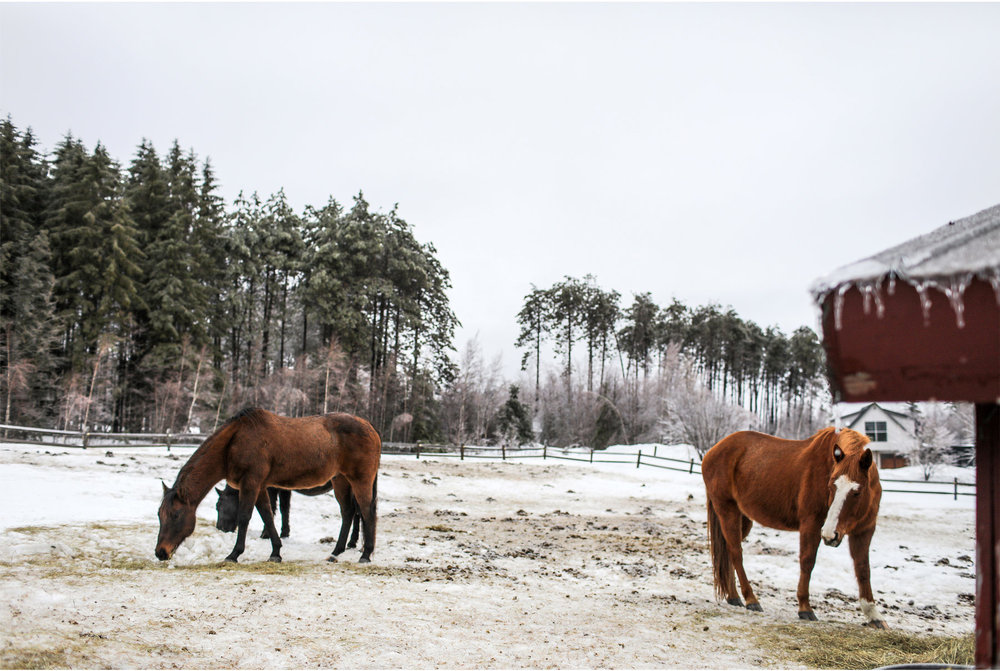 18-Stowe-Vermont-by-Andrew-Vick-Photography-Edson-Hill-Winter-Lodge-Horses.jpg