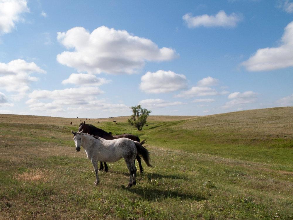 DinesC_Ranch_Series_Roundup-Horses_18x12_$450.jpg