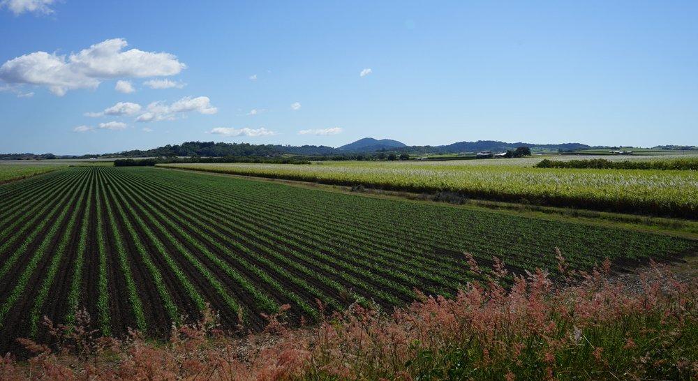 cane farm.JPG