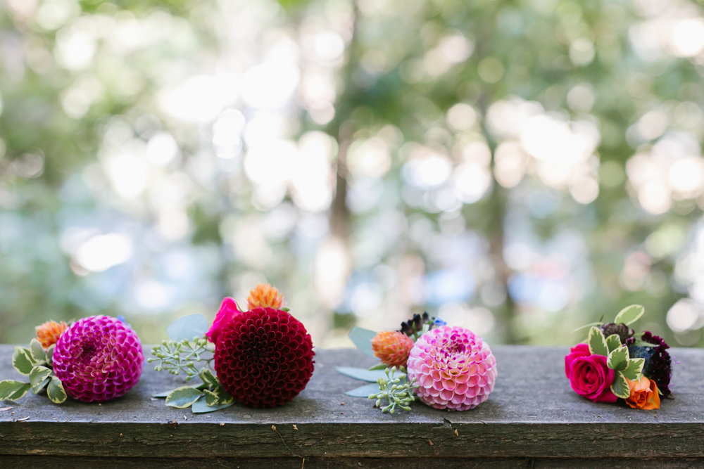 Colorful pink dahlia boutonnieres lined up before being pinned