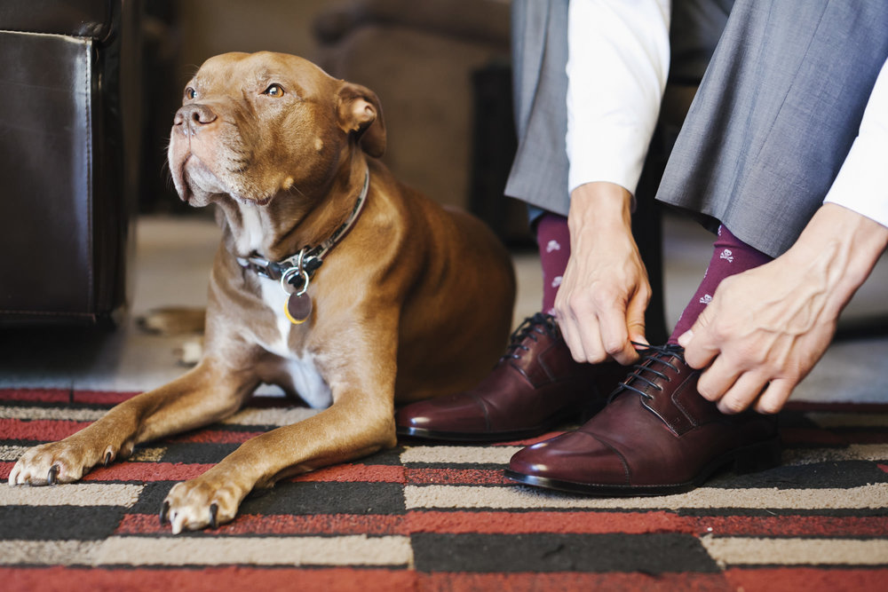 Sweet pitbull lays next to groom as he puts his wedding shoes on