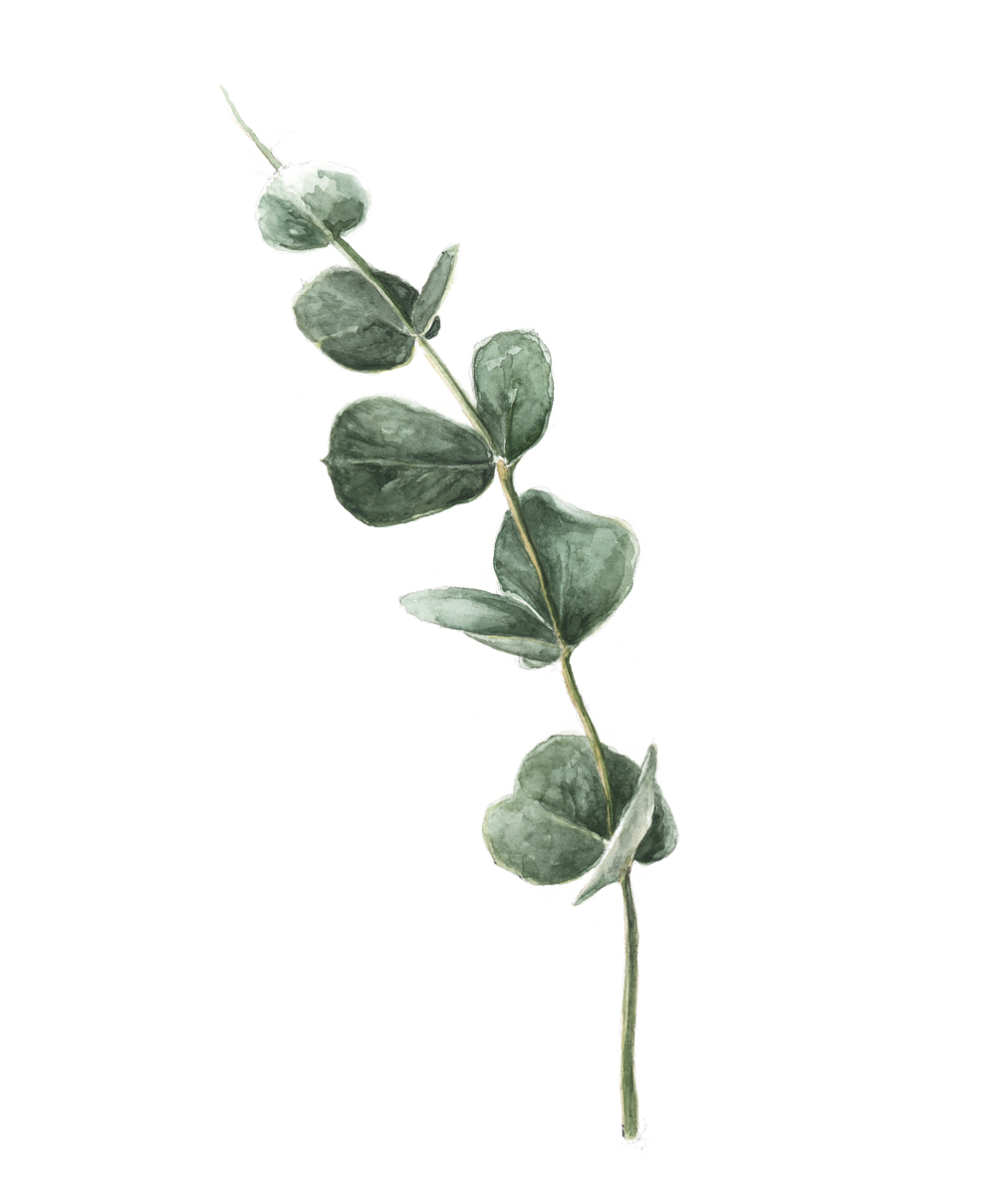 Eucalyptus artwork 1.png
