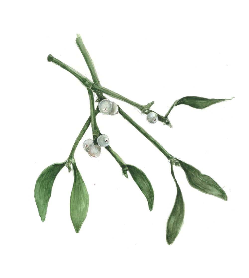 Mistletoe artwork.png