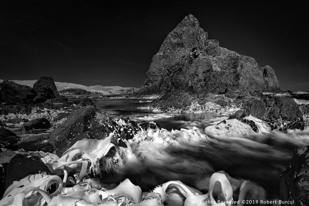 Lion Rock and kelp