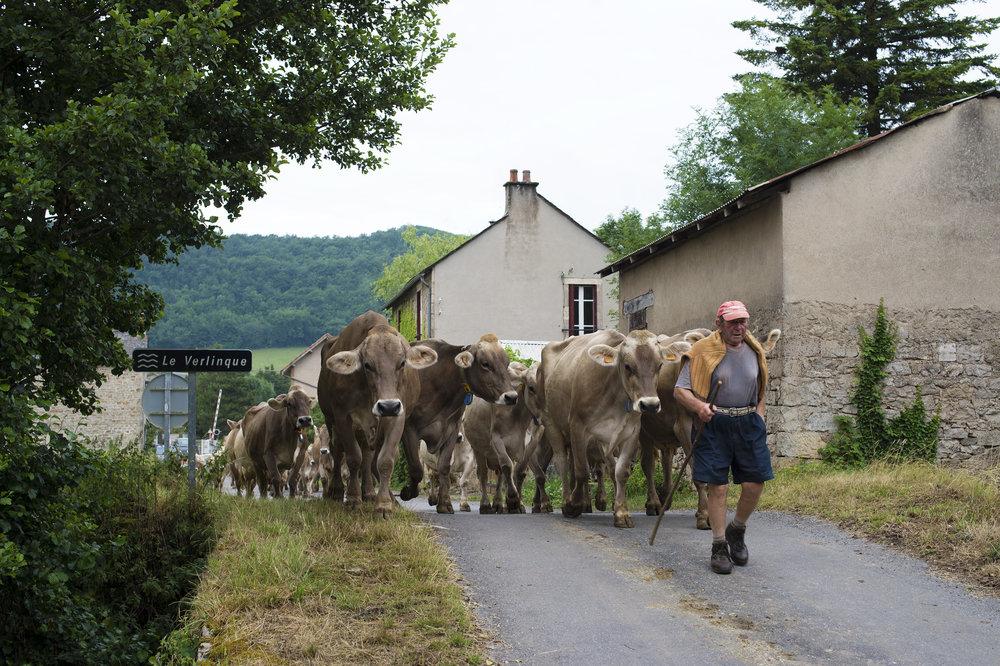 bastide & vaches choix.jpg