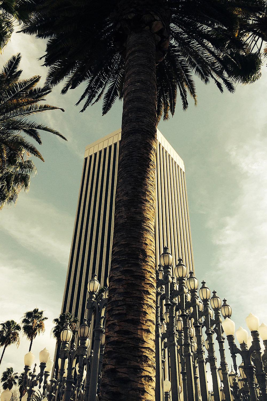 palmiers lacma