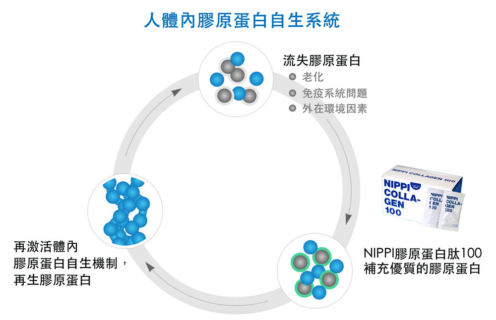 Collagen Regeneration Cycle_5gx30_chinese.jpg