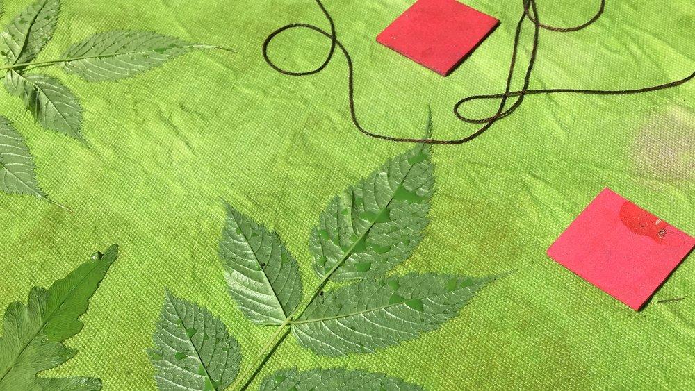 Goatsbeard leaves, cotton string, and craft foam squaes