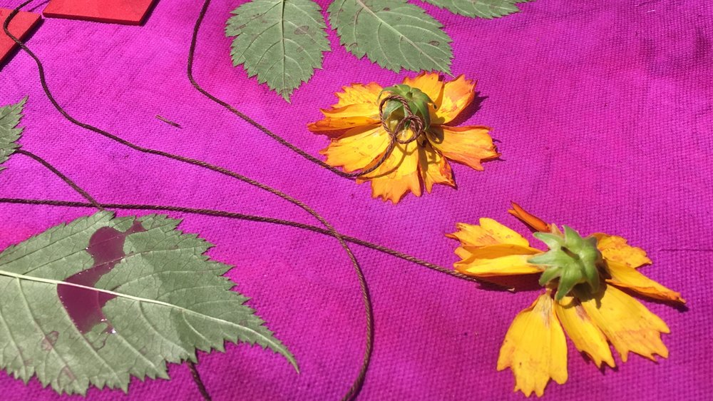 Coreopsis blooms, Goatsbeard leaves, and cotton string